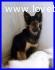 CACTUS cucciolone 1 anno e mezzo in canile dalla