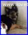 KITANA cucciolona dolcissima IN CANILE DA QUANDO