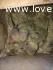 Pulli di Roseicollis Pezzati Verdi/Opali NT
