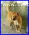 UMA cagnolona meravigliosa e affettuosissima